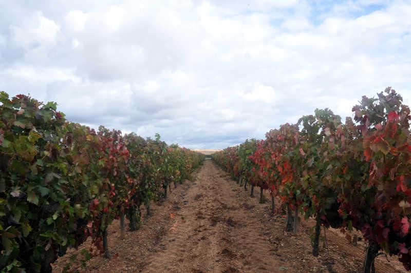 Le vigne di uno dei nostri clienti